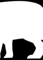 Arktična lisica