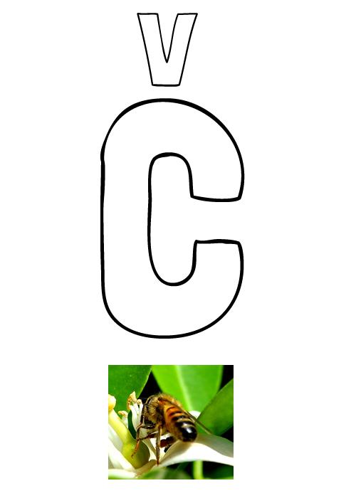 Pobarvanka črke Č