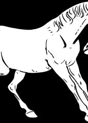 Lepi konj