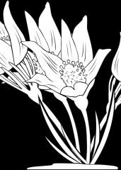 Lepa rastlina