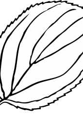 Pobarvanka list