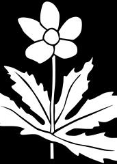 Majhna cvetlica