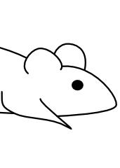 Miška