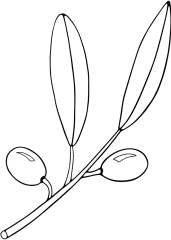 Olivna vejica