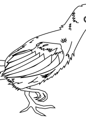 Pobarvanka piščanček
