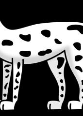 Pobarvanka dalmatinca