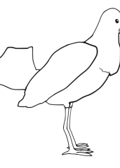 Pobarvanka goloba