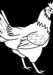 Pobarvanka kokoš 2