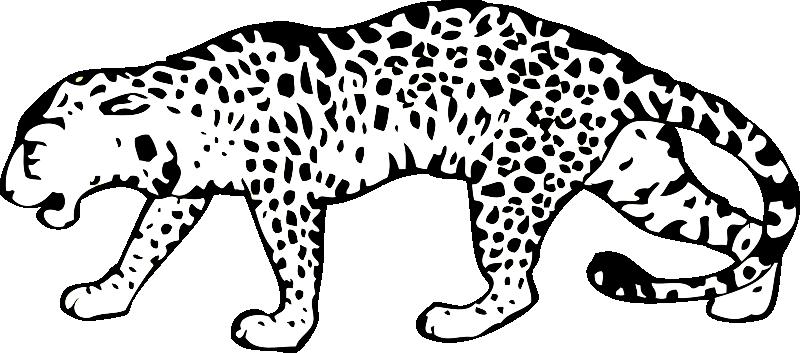 Pobarvanka leopard
