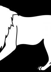 Pobarvanka lev