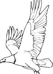 Pobarvanka orel