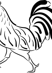 Pobarvanka petelin