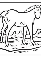 Pobarvanka poni