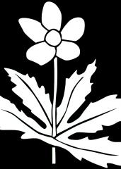 Rožica