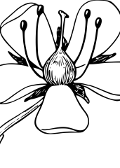 Venčni list