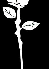 Pobarvanka vrtnica