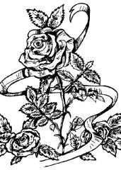 vrtnica3