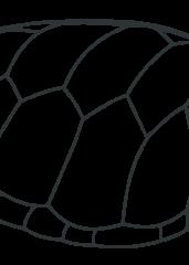 Želvin oklep